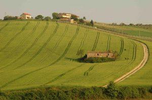 Tipico paesaggio collinare del medio Piceno