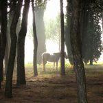 Sarteano, Fauna