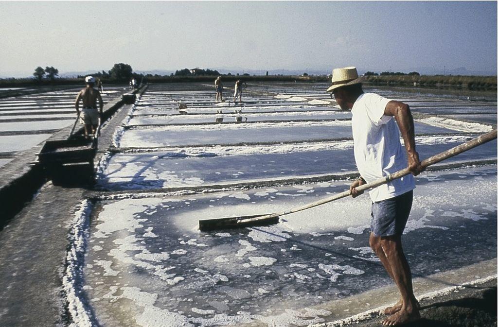 Cervia, la raccolta del sale