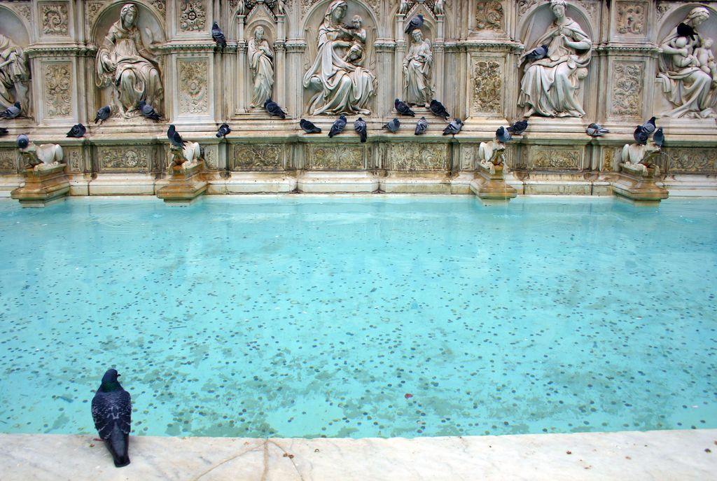 Siena, La fontana di Piazza del Campo