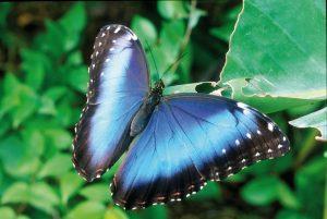 Casa delle farfalle Butterfly Arc