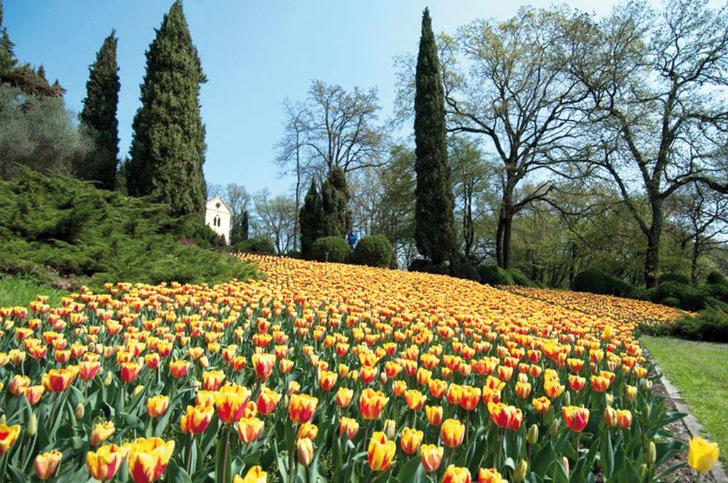 Tulipani ed Eremo