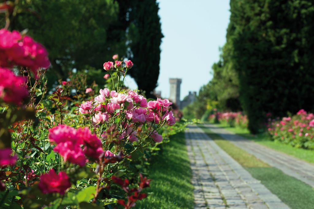 Viale delle Rose