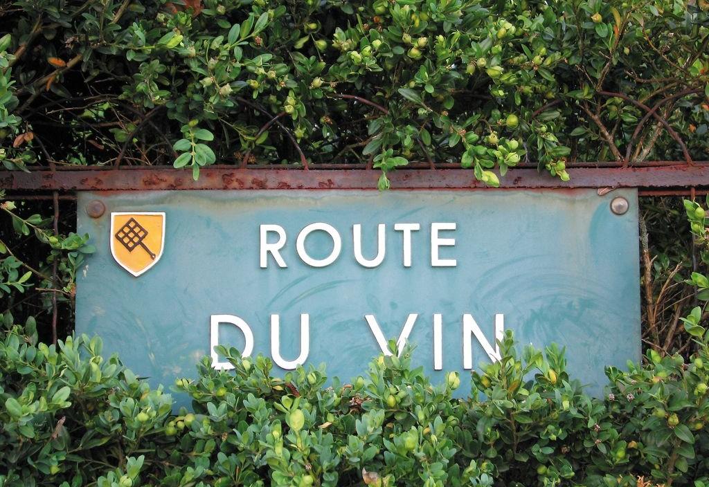 Un cartello indica la strada del vino