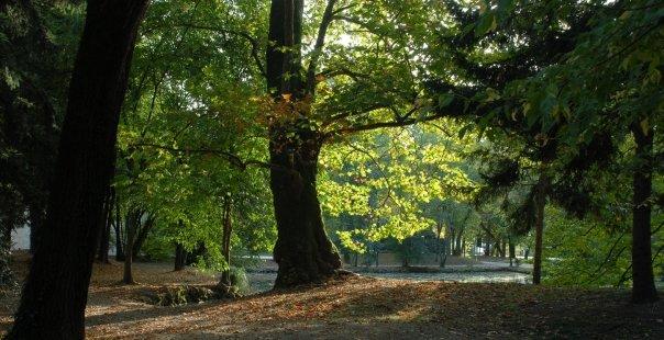 Parco degli Alberi Parlanti Treviso