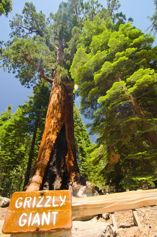 Sequoia allo Yosemite