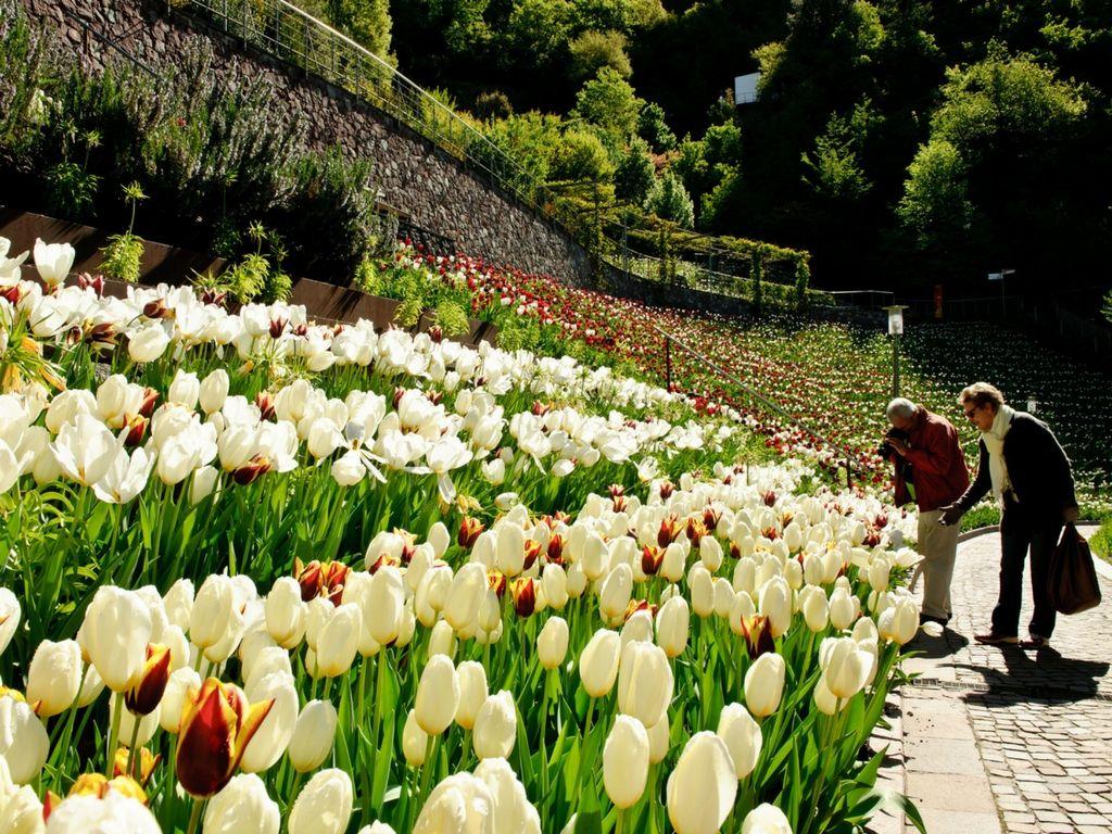 Tulipani-ai-Giardini-di-Castel-Trauttmansdorff