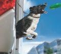 bonometti mobility dog