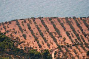 olivi e mare nel Gargano