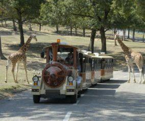 safari park