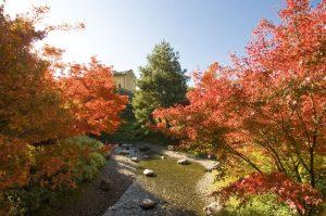 Giardino Giapponese Indian Summer Giardini di Sissi