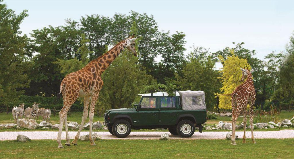 Sezione Safari - Parco Natura Viva