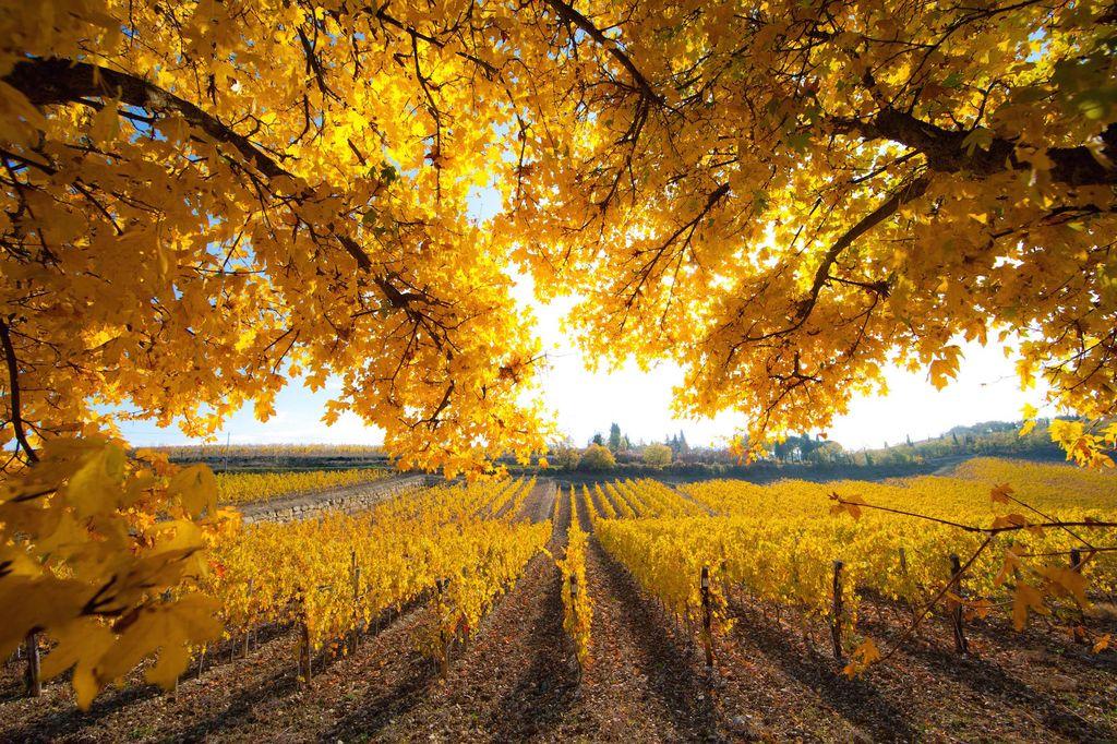 Chianti in autunno