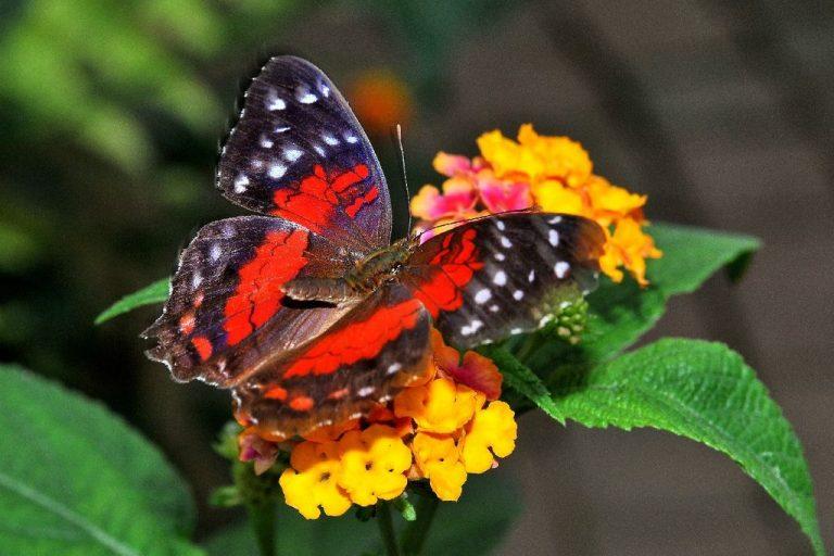 Apertura Casa delle Farfalle