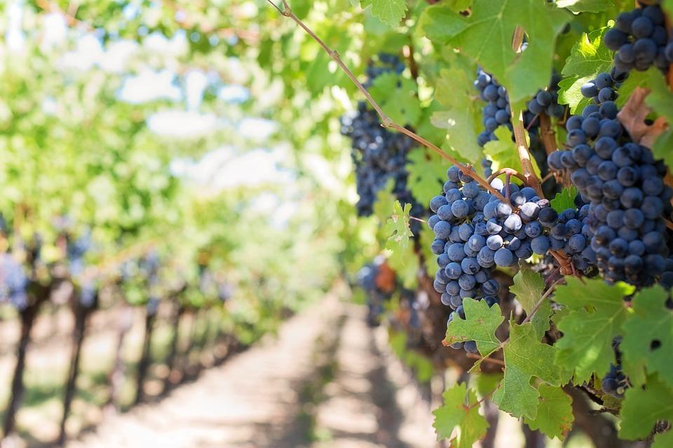 di vino in vino