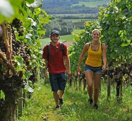 Strada del Vino Weinfelden