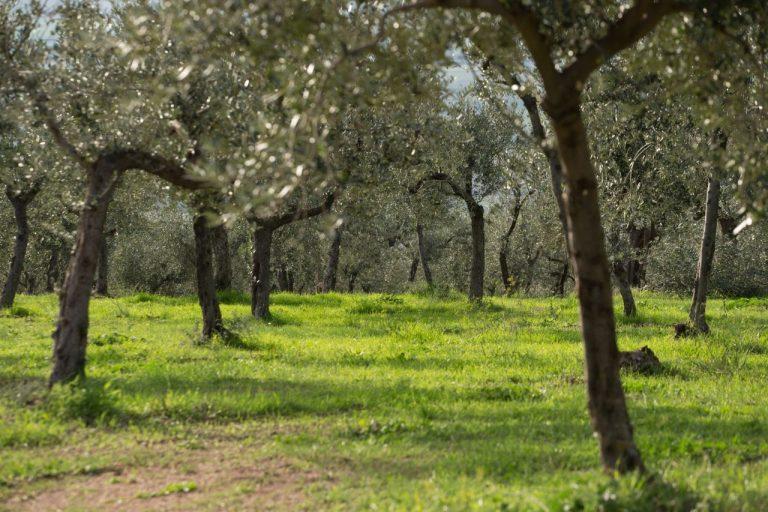 """Trevi, Umbria, """"Merenda nell'oliveta"""" – Un evento di inizio estate all'insegna del turismo dell'Olio"""